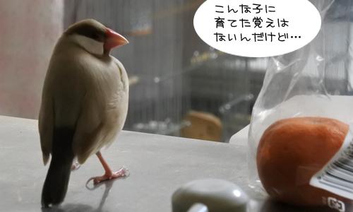 おみかん会議_4