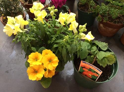 20151108今日買った花