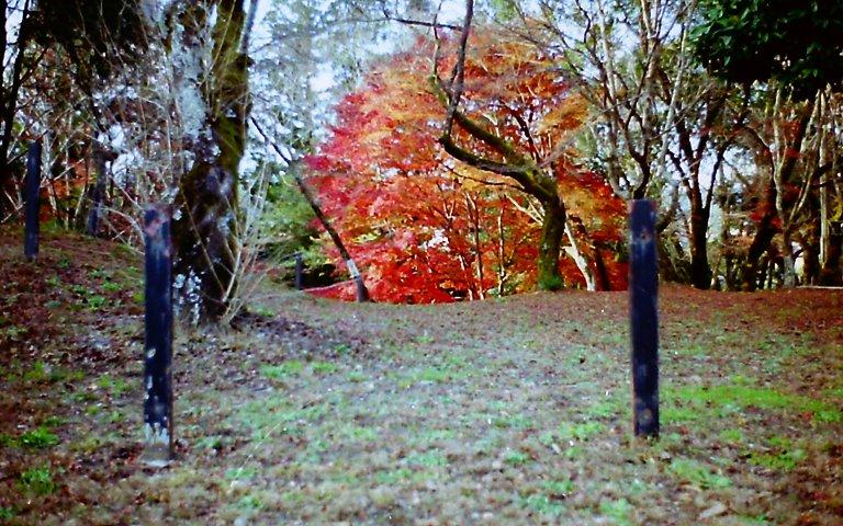 長篠城跡の紅葉-1 '2015