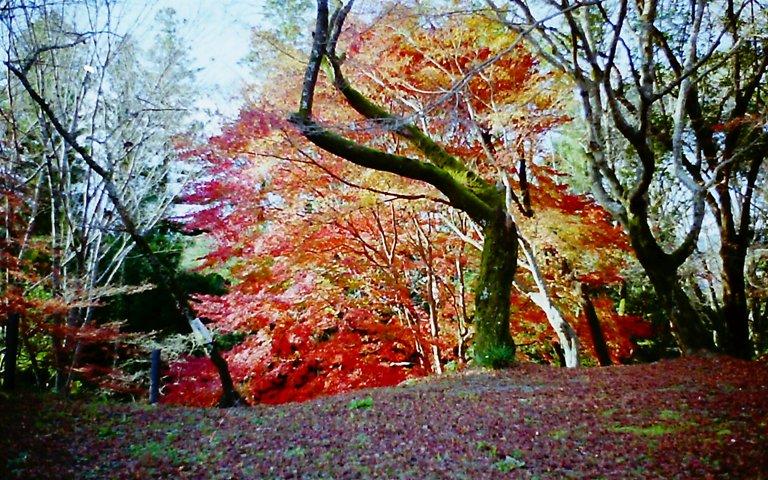 長篠城跡の紅葉-3 '2015