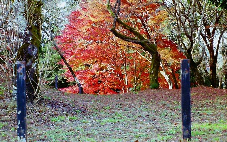 紅葉、-長篠城跡