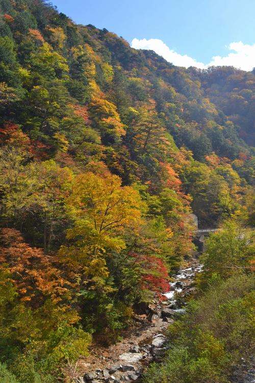 柳沢峠の秋35