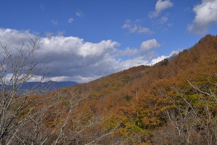 柳沢峠の秋60