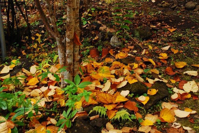 落葉の庭53