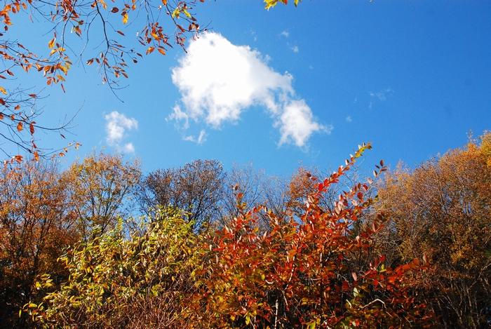 流れる雲と青空12