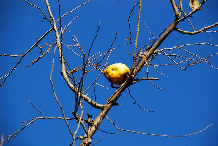たった一つ残された花梨3