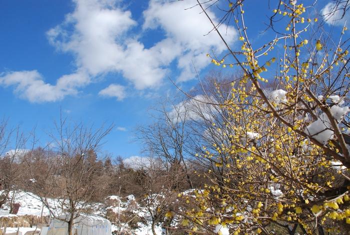 雪の次の日の風景16