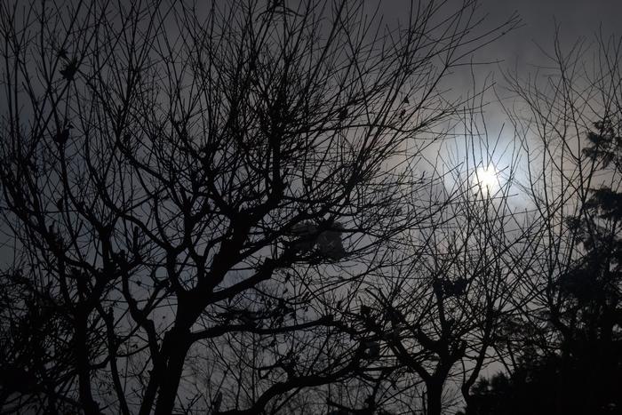 凍てついた太陽10