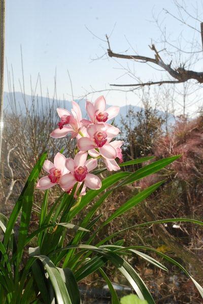 春の色13