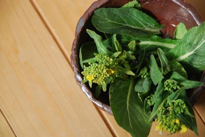 畑で見つけた菜の花23