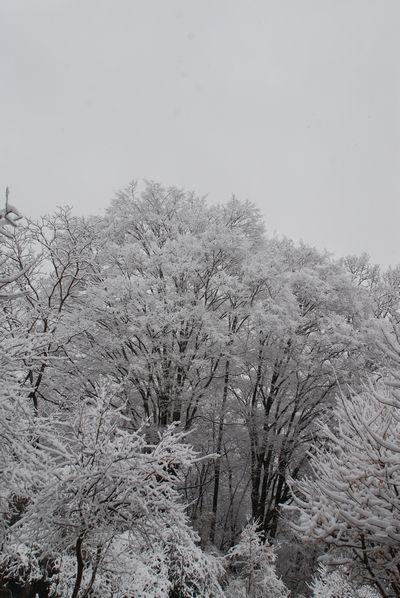 三月の雪8