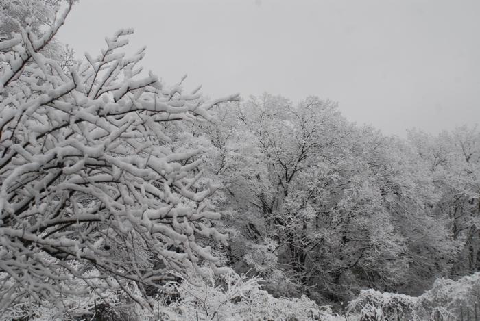 三月の雪11