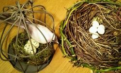 インコ産卵