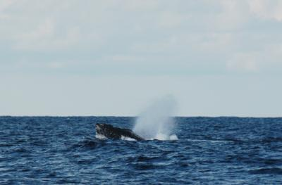 2016.02.28 ザトウクジラ4