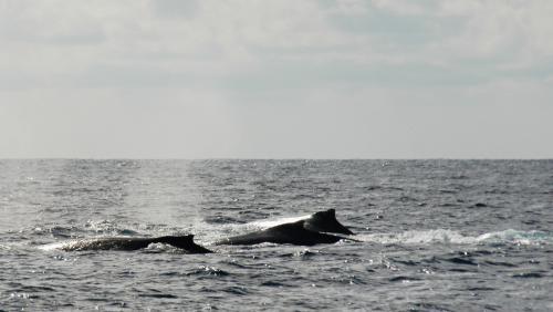 2016.02.28 ザトウクジラ6