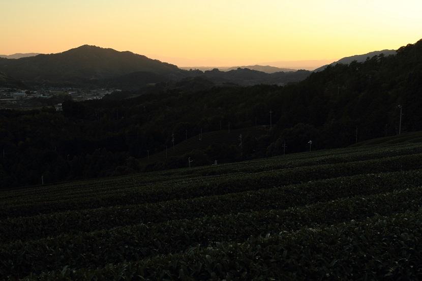 和束町茶畑、6