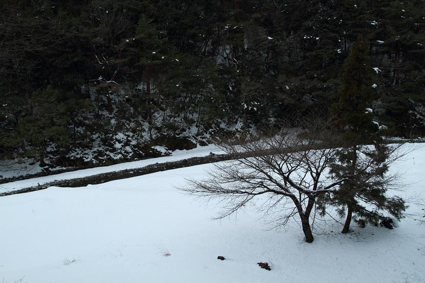 竜ヶ岳、1