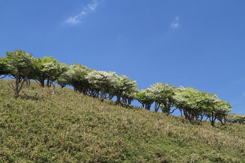 初夏、竜ヶ岳、2