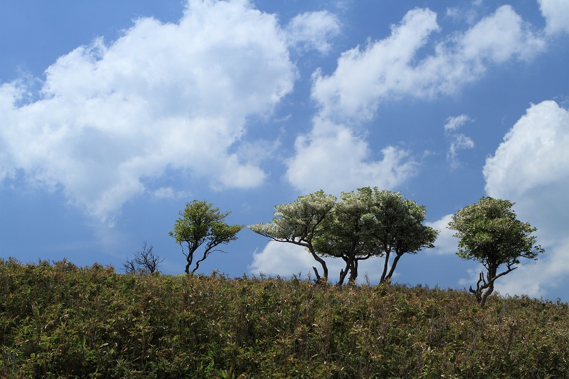 初夏、竜ヶ岳、3