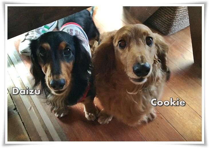 2 クッキー&だいず