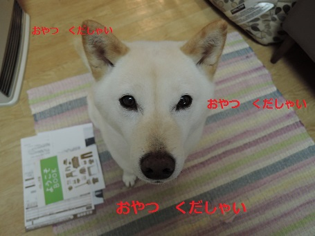 DSCN6175.jpg