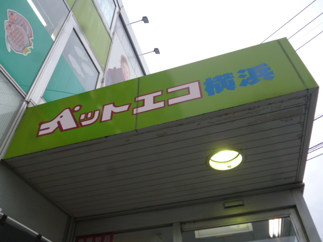 P1180369.jpg