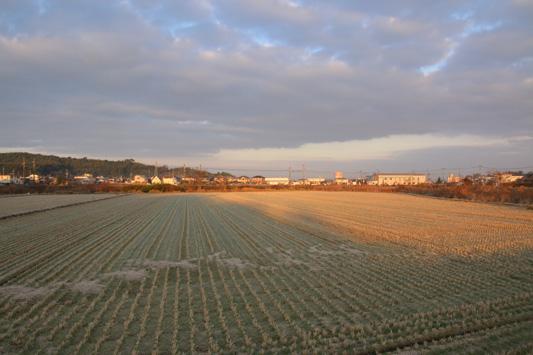 20160109隈川 (4)のコピー