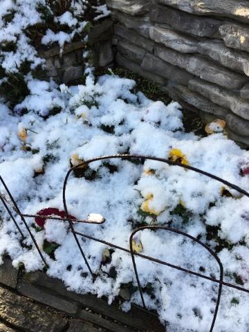 パンジーと雪