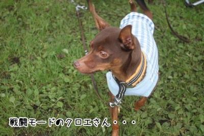 2015_09_27_9999_35.jpg