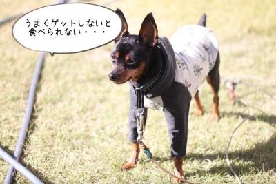 2015_12_05_9999_21.jpg