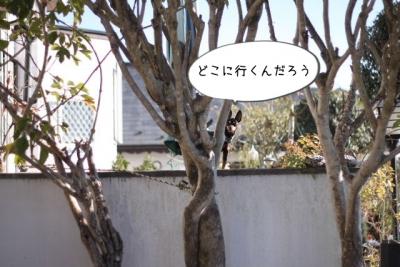 2015_12_29_9999_21.jpg