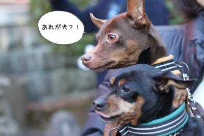 2016_01_01_9999_31.jpg
