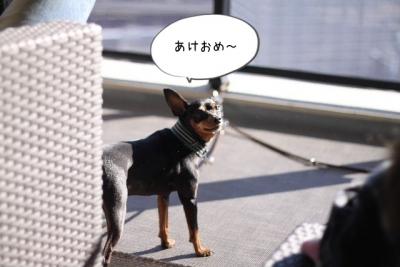 2016_01_01_9999_3.jpg