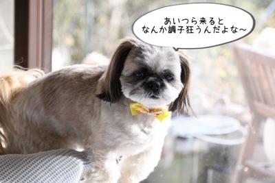 2016_02_06_9999_21.jpg