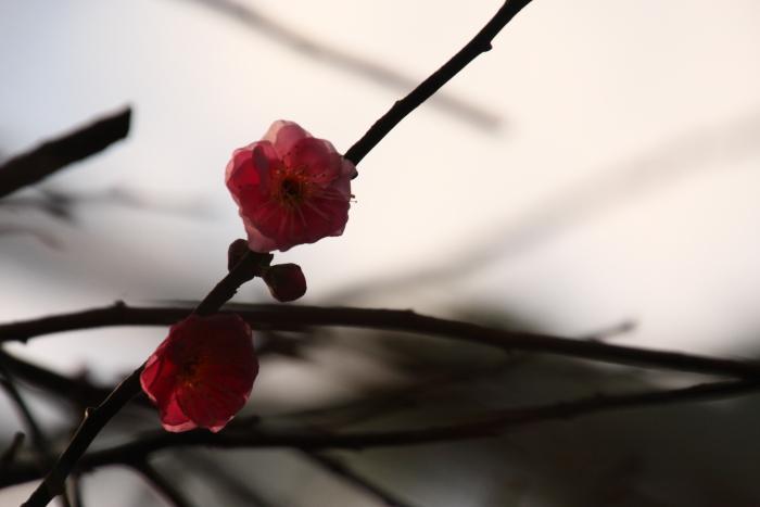 160111-oyama-08.jpg