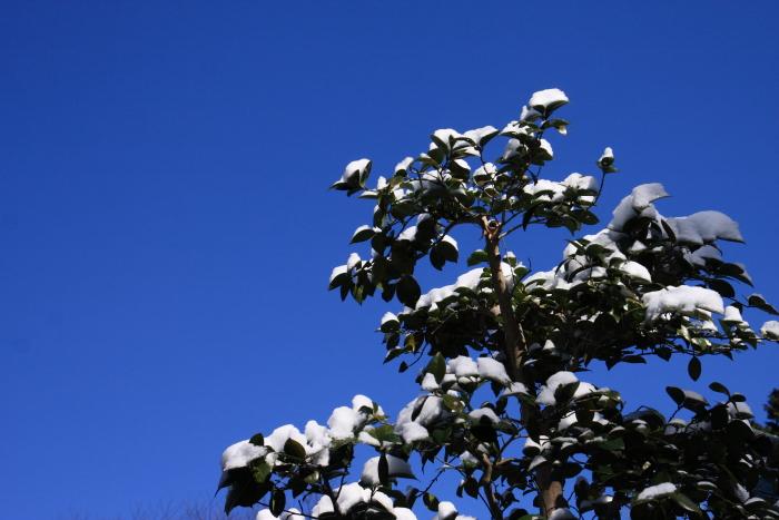 160207-snow-06.jpg