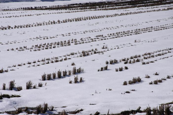 160207-snow-13.jpg