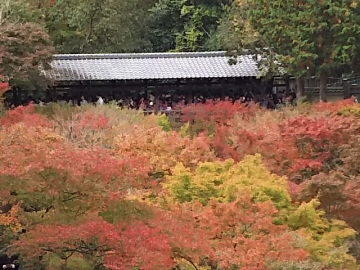 kyoto60.jpg