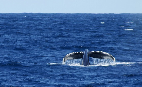 1601311429鯨-2