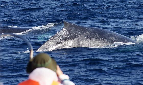 1601311452鯨-4