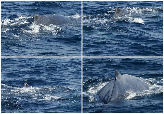 1601311452鯨連続-1