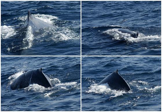1601311452鯨連続-2