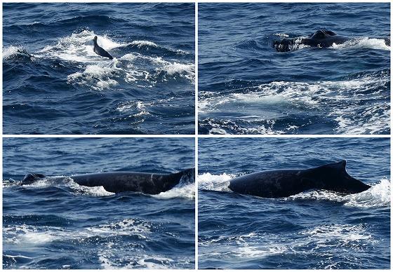 1601311452鯨連続-3