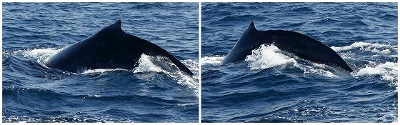 1601311452鯨連続-4