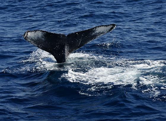 1601311452鯨連続-6