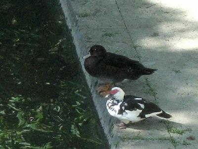 070928沖縄の鳥-1