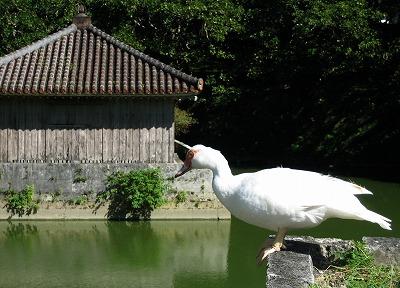 070928沖縄の鳥-2