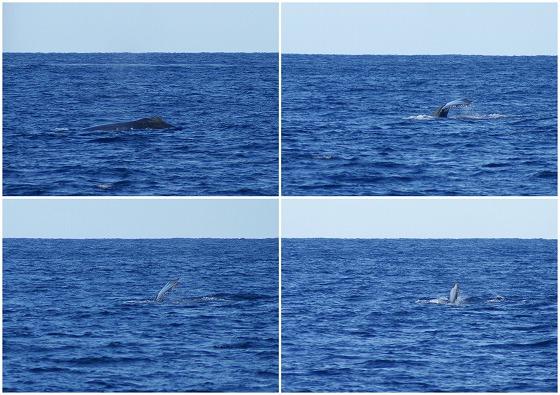 1601311514鯨連続-7