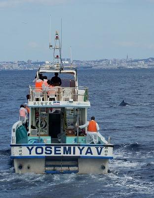 1601311525鯨連続-11