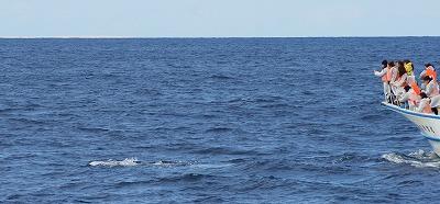 1601311526鯨連続-12